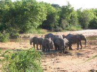 NG-Domains sind die Domains aus Nigeria, einem Land reich an Natur und Naturschätzen
