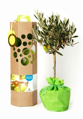 Olivebäumchen als Geschenk
