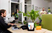 """Die Mitweltstiftung arbeitet mit Computer und """"Fenchel"""" in ihrem Büro und mit fast 100% gebrauchter Büromöbel"""