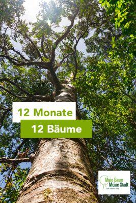 Die Baumpflanzaktion 12 Monate- 12 Bäume für Hamburg