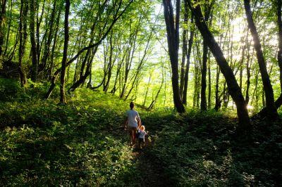 Moderne Bewirtschaftung des Waldes Dank DekkaData Euroforst sichert ihn für die kommende Generation