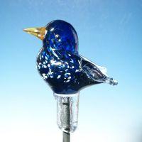 Der Star ist Freeform-Vögel des Jahres - aber nur einer unter vielen Stars.