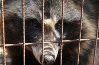 Warnung: Kaufhaus Breuninger verkauft Hundefelle - Tierrechtler lassen rechtliche Schritte prüfen