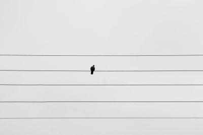 """Lindenbergs aktuelle Ausstellung zeigt abstrakt wirkende Stadt- und Naturmotive wie """"Bird on the wire"""""""