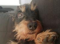 Mein Ole – Das besondere Hundebuch