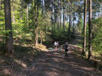 Das Team von Greiter & Cie. pflanzte in kleinen Teams 1.000 Weißtannen für den Allgäuer Bergmischwald.
