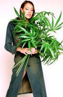 Sunrise Marihuana Pflanzen