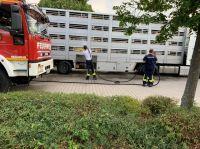 Polizei stoppt überhitzten Tiertransporter auf A3 bei Nürnberg - Tierrechtler stellen Anzeige