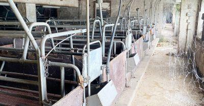 Seit 3 Jahren leer: Spinnweben im Schweinehochhaus - Deutsches Tierschutzbüro fordert Abriss