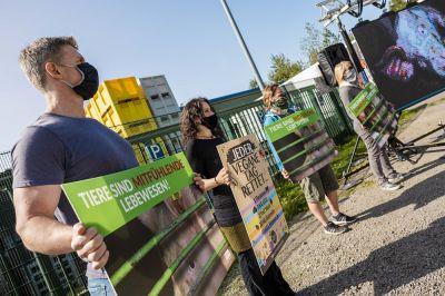 Schockbilder aus Tönnies- Zulieferbetrieb: Tierrechtler*innen zeigen Bilder auf Leinwand vor Schlachthof