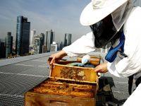 5-Sterne Bienen im Jumeirah Frankfurt