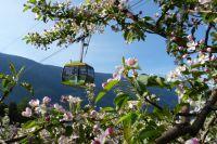 Inmitten herrlich duftender Apfelblüten hoch hinauf auf herrliche Panorama-Aussichtspunkte