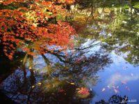 Japanische Herbstimpression