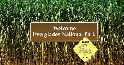 Der Everglades National Park, ein Juwel des Sunshine State!