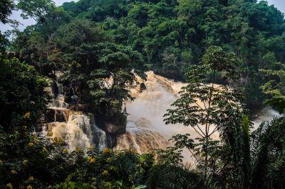 Enchanting Travels investiert ab sofort in ein Klimaprojekt zur Erhaltung des Regenwalds Foto: labwebmaster/Pixabay