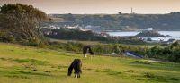 Guernsey im Herbst