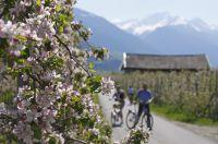 Frühlings-Radtour durch blühende Apfelwiesen – Frieder Blickle - MGM