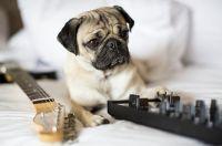 """Hard Rock Hotel Tenerife bietet mit """"Animal Instinct"""" einen neuen Service für Haustiere an"""