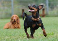 Urlaub mit Hund - Aktiv-Kurse in der Hundeschule Satke