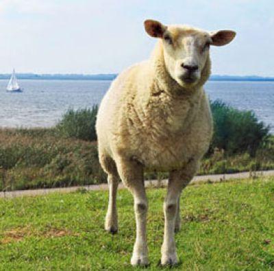 Eine Ferienunterkunft an der Nordsee - ein tierisch günstiges Vergnügen