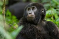 copyright Uganda Tourism Board