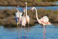 Flamingos Parco del Delta del Po© Archivio Po Delta Tourism