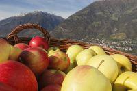 Die herbstliche Erntezeit in Südtirol ist die Zeit der Äpfel und der regionalen Spezialitäten. (SMG)