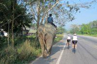 Vorbei an Elefanten: Radreise durch Thailand