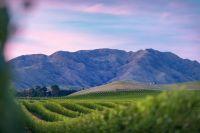 Von der ersten Rebe zum globalen Exportschlager: Villa Maria feiert 200 Jahre Weinbau in Neuseeland