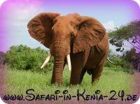 Jeep Safaris in Kenia
