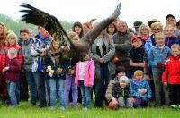Die Adler der Falknerei Pierre Schmidt zogen die Besucher bei der Greifvogel-Flugschau in ihren Bann.