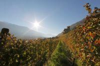 Der goldene Herbst in Naturns - Frieder Blickle