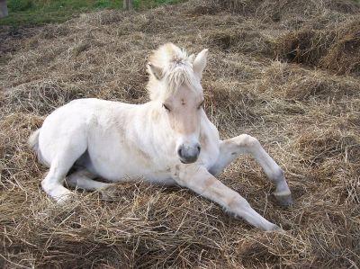 Horse-Domains: Optimale Domain für alle Pferdefreunde