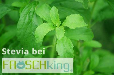 Stevia Produkte bei FROSCHking