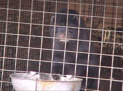 Arbeitskreis humaner Tierschutz e.V. stellt Strafanzeige gegen Veterinäramt Borken (NRW)