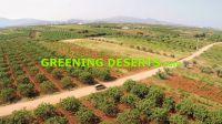 Greening Deserts Wallpaper