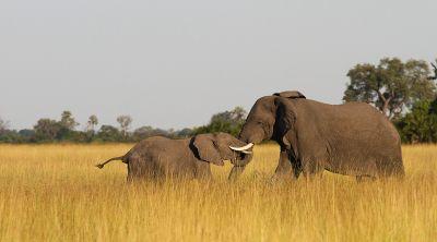 Elefanten, Foto von Daniel Myburg