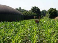 Biogas: Wichtiger denn je?