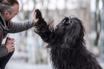Clean Feeding - für eine vollwertige und nachhaltige Hundeernährung (© )