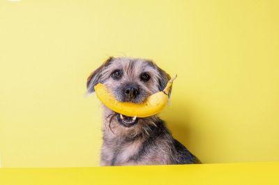 Insektenbasiertes Hundefutter von Tenetrio bietet Chance für mehr Nachhaltigkeit in der Hundehaltung (© Dajana Naas)
