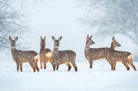 Im Winter haben es Wildtiere aktuell sehr schwer
