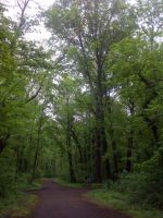 im Leipziger Auwald