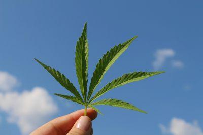 Greening Deserts Hemp Leaf Paper
