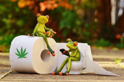 Hanf-Toilettenpapier Hanfpapier.org