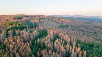Klimakrise und Corona-Krise: Klimawandel verstärkt Artensterben und Waldsterben in Europa