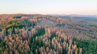 Baumsterben und Waldsterben in Deutschland
