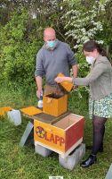 Mit LAPP Bienen der Pflanzenvielfalt auf der Spur