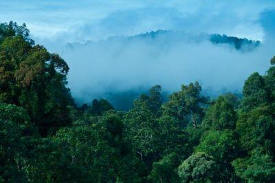 Die Gesamtfläche von Malaysia ist zu 55 Prozent mit Regenwald bedeckt. (Bild: Herbert Kronauer)