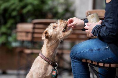 Nachhaltige Hundefütterung mit Insekten (© Janine Techow)