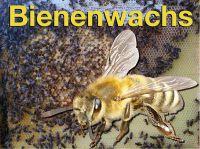 Bienensterben durch Wachsskandal